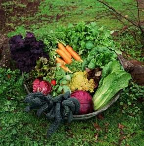 fall-veggie-garden